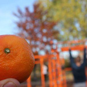 Freiluft Workout mit WIG und ISW oranger Traum auf Donauinsel